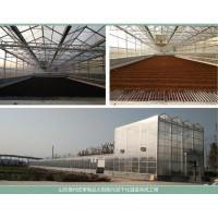 皮革污泥处理太阳能污泥干化系统