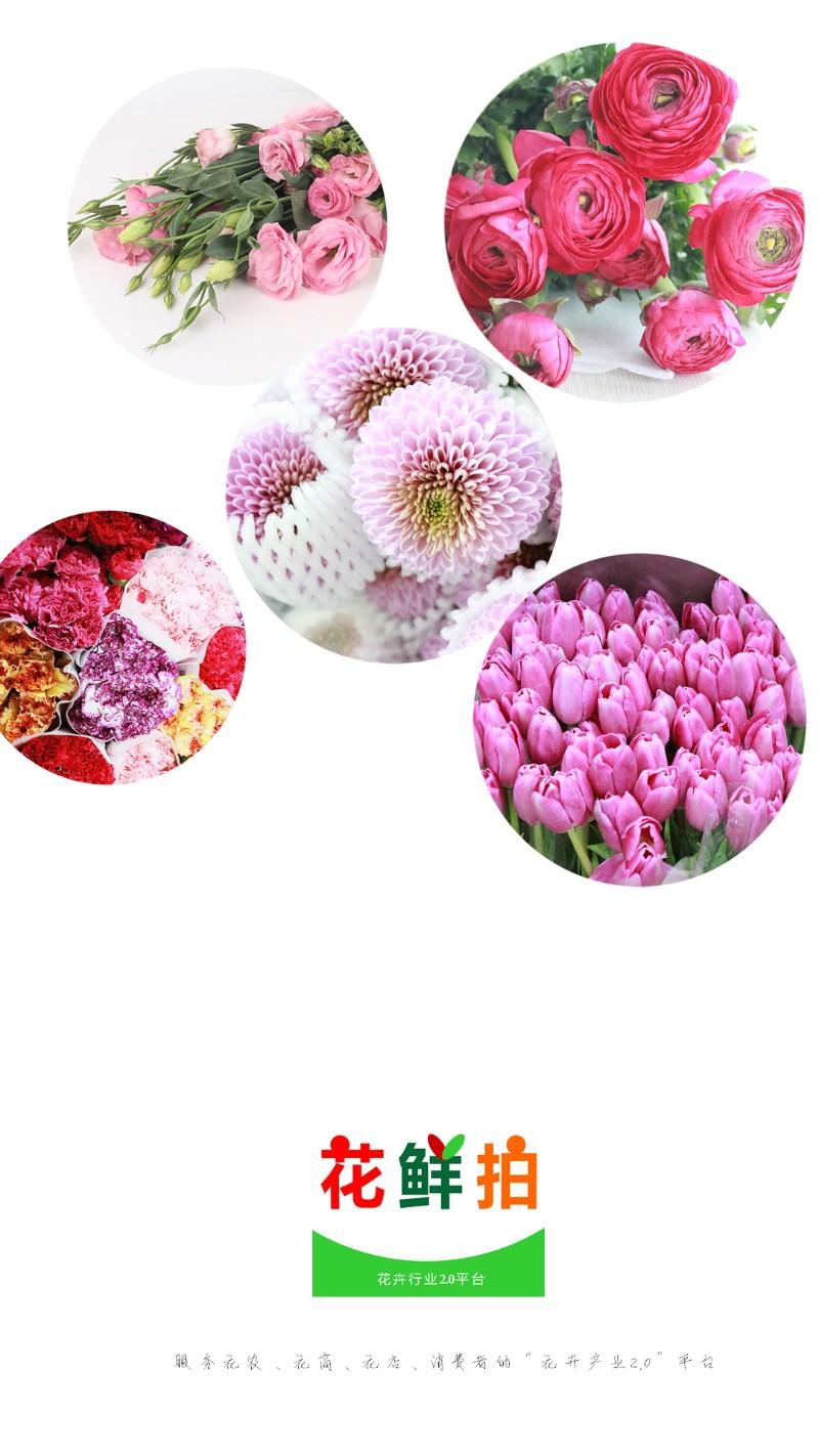 鲜花超市-鲜切花直供店,+app支持,线上线下齐开花!