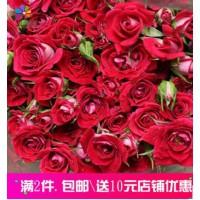 多头波塞尼娜玫瑰鲜花批发基地鲜花直供